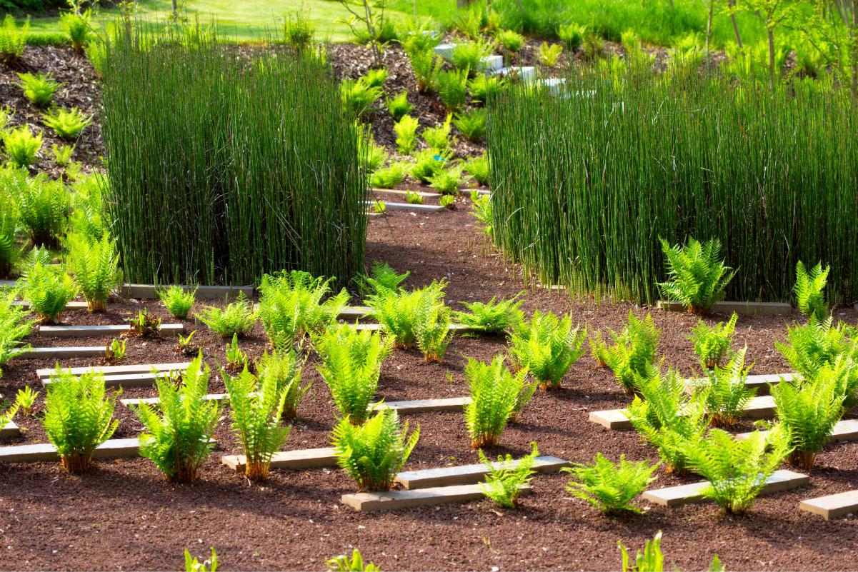 Plantes hommes et climat les outils du jardin for Jardin du plantes